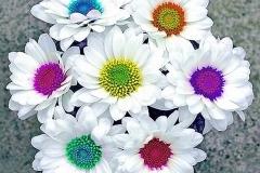 Daisies bridal bouquet
